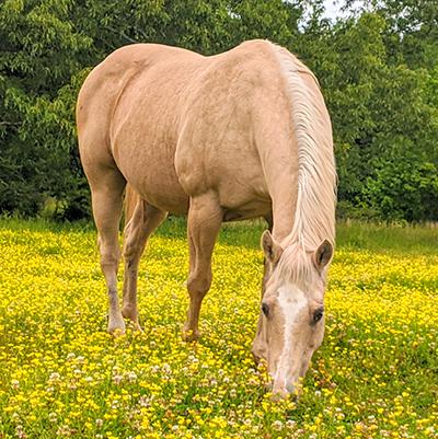 My horse Star